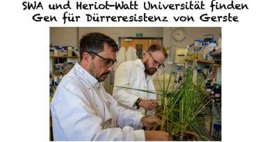 SWA und Heriot-Watt Universität finden Gen für Dürreresistenz von Gerste