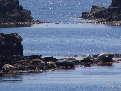 Robben auf der Sonnenbank
