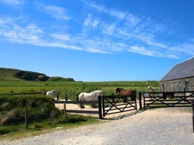 Kilchoman Farm