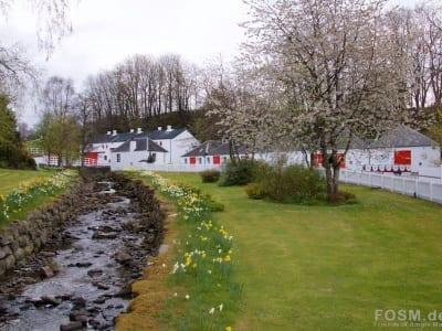 Edradour - ein Blütenmeer