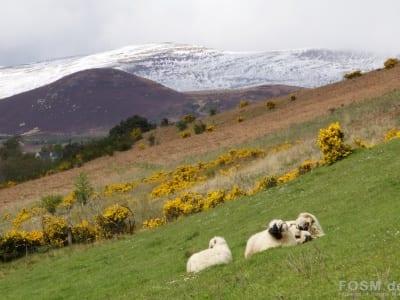 Glen Wyvis - Natur pur