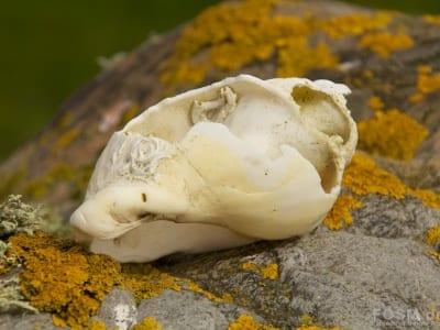 Schnecke aus dem Loch Indaal