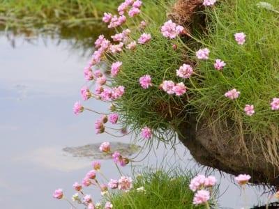 Loch Indaal bei Gartbreck