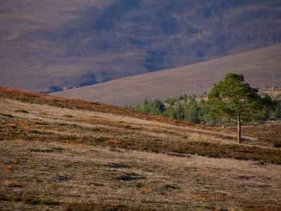 SOSWF - Roadtrip 2014 - Glenlivet Hill Trek